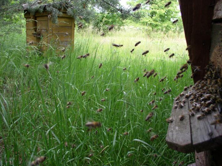 Wiersze O Pszczołach Pszczoły